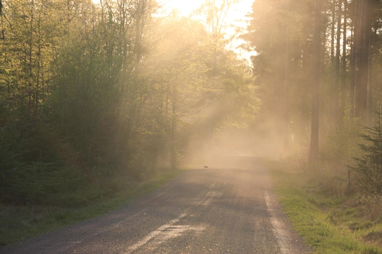 Hagavägen dimma