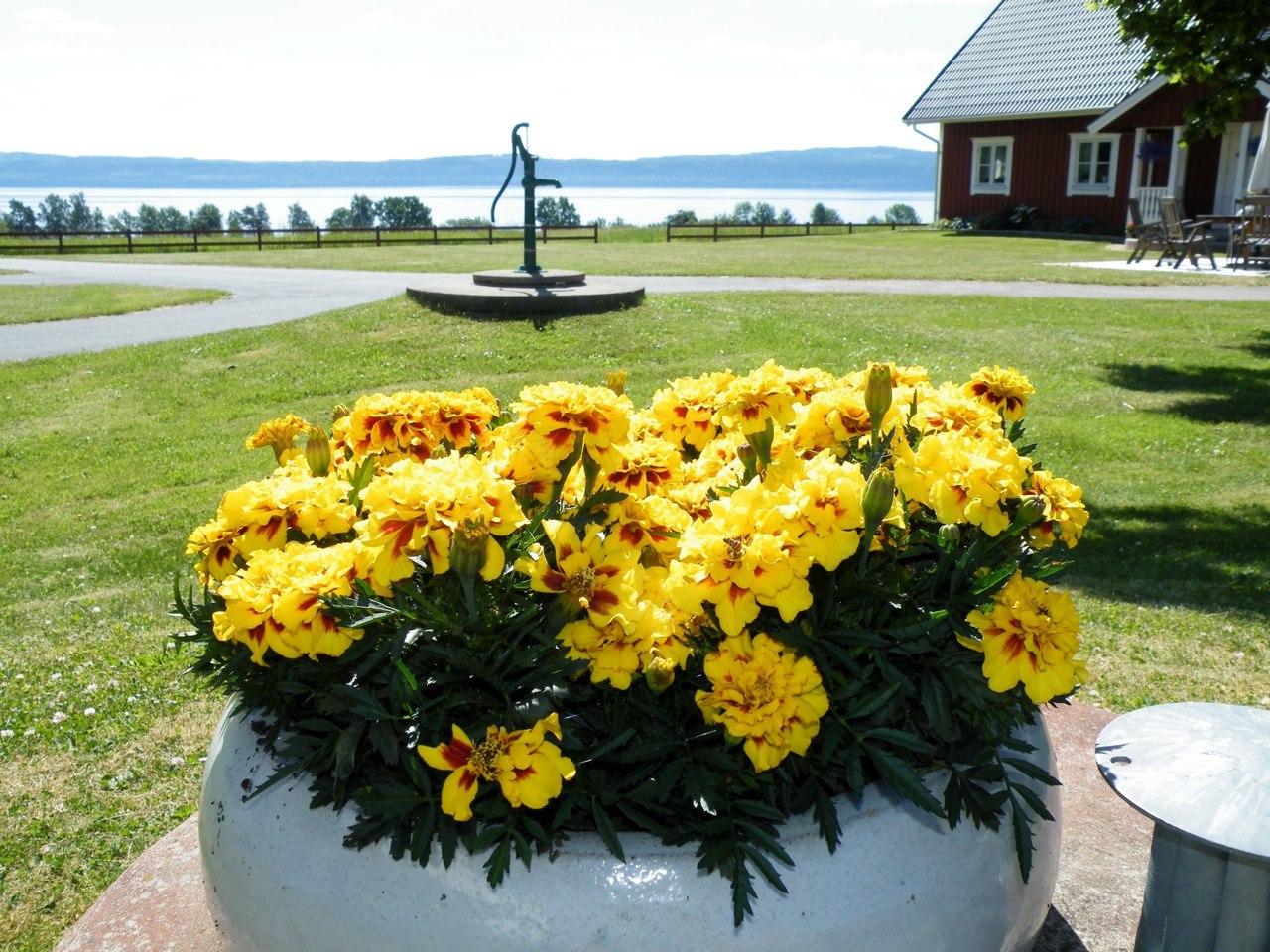 Vy Persgården